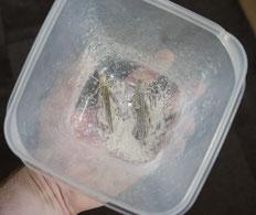 Heuschrecken Leopardgeckos Vitamine Mineralstoffe