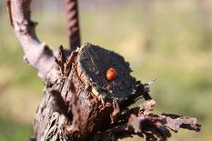Het biologische evenwicht in de wijngaard