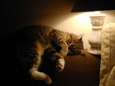 Katze liegt auf Sofa