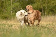 Le chien de nos jours (2)