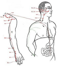 Exemple de meridià d'intestí prim