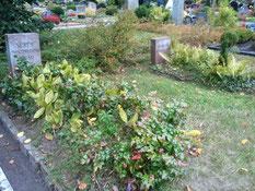 Grab des sowjetischen Kriegsgefangenen Semjon Postnikow (130208 XB), der am 17. August 1942 im Arbeitskommando 190 Heeslingen an einer Lungenentzündung verstorben ist. Foto: V. Fleig, 2013