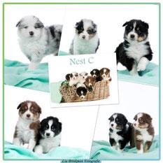 Kiekjes van het C-nest december 2015