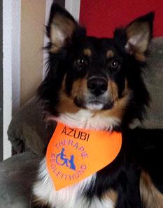 AZUBI , Therapiehund, Begleithund,halsduk terapihund