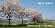 さくラさく小径 長野県 佐久市 あづま不動産