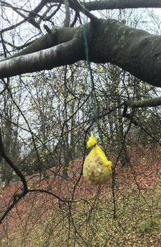 Sachunterricht: Vogelfutter selber hergestellt