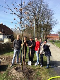 Im Rahmen des jährlichen Umwelttages in Adenbüttel tragen wir gemeinsam mit anderen freiwilligen Helfern dazu bei, dass unser Dorf schön und sauber bleibt.