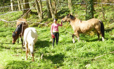 developpement-personnel-cheval