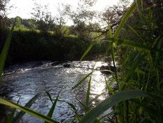 flowing freshwater