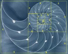 www.ronaldosephius.nl gulden snede nautilus schelp fibonacci Bewust Groeien vanuit Innerlijke Kracht!