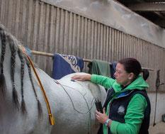 TENS-Therapie des Pferderücken
