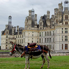 Les ânes de Madame - Balades accompagnées à thème en Sologne, Val de Loire, châteaux de Chambord, Cheverny, Villesavin, du Moulin - Vacances nature en famille et entre amis