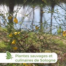 Les ânes de Madame - Balades accompagnées en Sologne, Val de Loire, châteaux de Chambord, Cheverny, Villesavin, du Moulin - Randonnées à thème - Plantes sauvages comestibles de Sologne