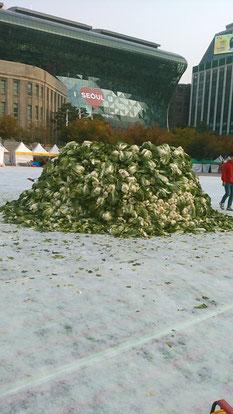 大量の白菜。キムチ用ではなく、投げたりのイベント用だそうです。