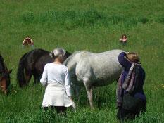 Sandrine Fournier - Atelier Communication Animale - Fleurs de Bach - Sophrologie - Médiation Animale -Sophro Cheval