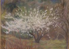梅の木   パステル15号