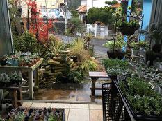 多肉植物 廿日市 広島