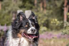 Recallers Hondenschool De Lijn