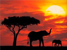 Tours por AFRICA