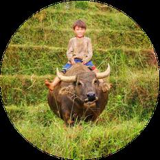 Junge auf Wasserbüffel reitend – zur digitalen Tour durch den Norden Vietnams