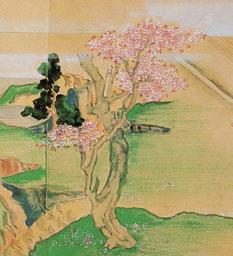 親鸞の時代の桜。『西行物語絵巻」より