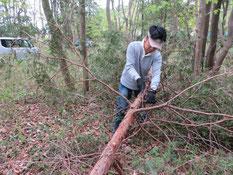 丸太切り用に枝を落とす