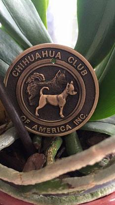 Titre champion chihuahua