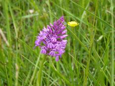 orquídeas vic-bilh