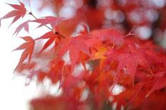 アクアリウムと紅葉