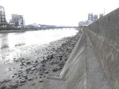 富田川河口 はこちらからどうぞ