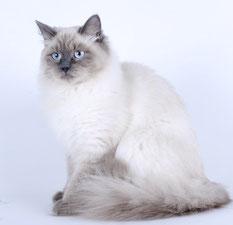 Баллада Кошка Моего Сердца