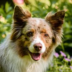 Fotoshooting mit Hund in Hamburg, Niedersachsen und Schleswig-Holstein