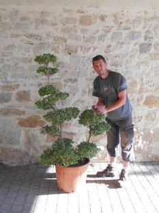 Eddy Feuillet, jardinier paysagiste spécialisé en Niwaki