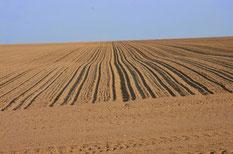 La plaine de la Beauce pourrait devenir un désert vers la moitié de ce siècle...