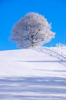 白い木の写真