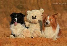 """""""einzigartige"""" Zuchthunde Lucy und Duke <3"""