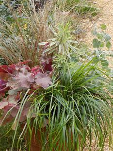 heuchera, carex, iris, ophiopogon, prennials, trajnice, jesen , zima, evergreen, zimzelene
