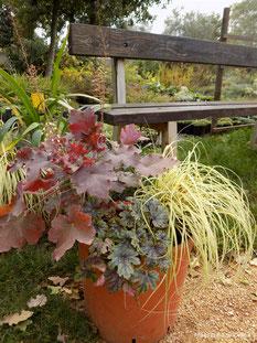 heucherella, helleborus, heuchera, carex, perennials, evergreen, trajnice, zimzelene, jesen, zima