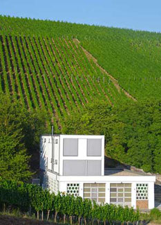 Weingut Hiller Randersacker