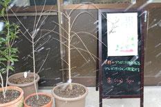 京都のプレゼンス(存在感)をプレゼンテーション(提案)する