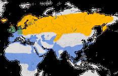 Karte zur Verbreitung der Bekassine (Gallinago gallinago)