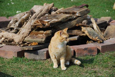 Garfield sonnt sich