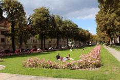 Gartenanlage Ceciliengärten im August mit Rosen, auf dem Rasen liegen Menschen. Foto: Helga Karl