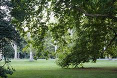 Der Treptower Park - ein großes beliebtes Gelände zum spielen, Picknick, erholen