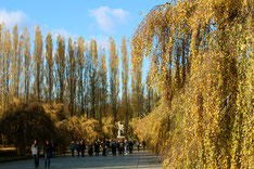 "Pappeln im Herbst. Statue ""Mutter Heimat"" Sowj. Ehrenmal Treptower Park"