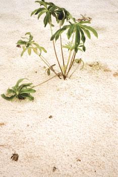 apollo-artemis, mode, design, nachhaltig, handgemacht, foto, shooting, pflanze, sand