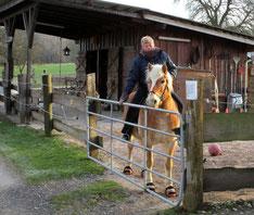 Durchs Paddocktor vom Pferd aus