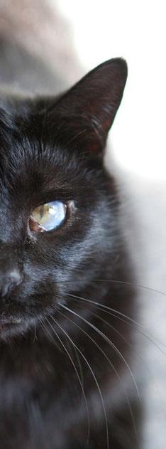 Handicap - Blinde Katze