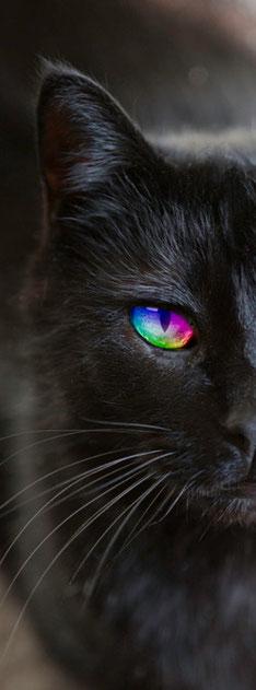 Katze im Regenbogenland