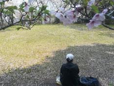 宮山公園で名残の桜を楽しむ